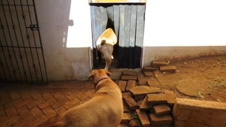 maak'it - DIY Doggy Door in 6 easy steps