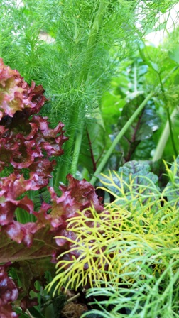 Herbs and vegetable leaves