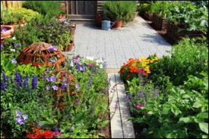 kitchen garden in raised beds