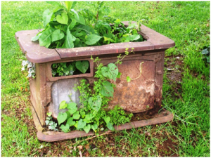 Upcycle and recycle containers to plant in