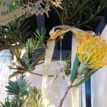 Fairy lights and fynbos