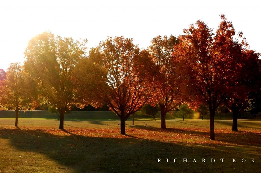 Autumn Rietondale Park