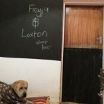 The DIY Doggy Door in action