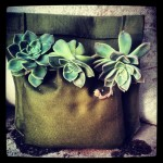 Make your own pocket planters for your walls